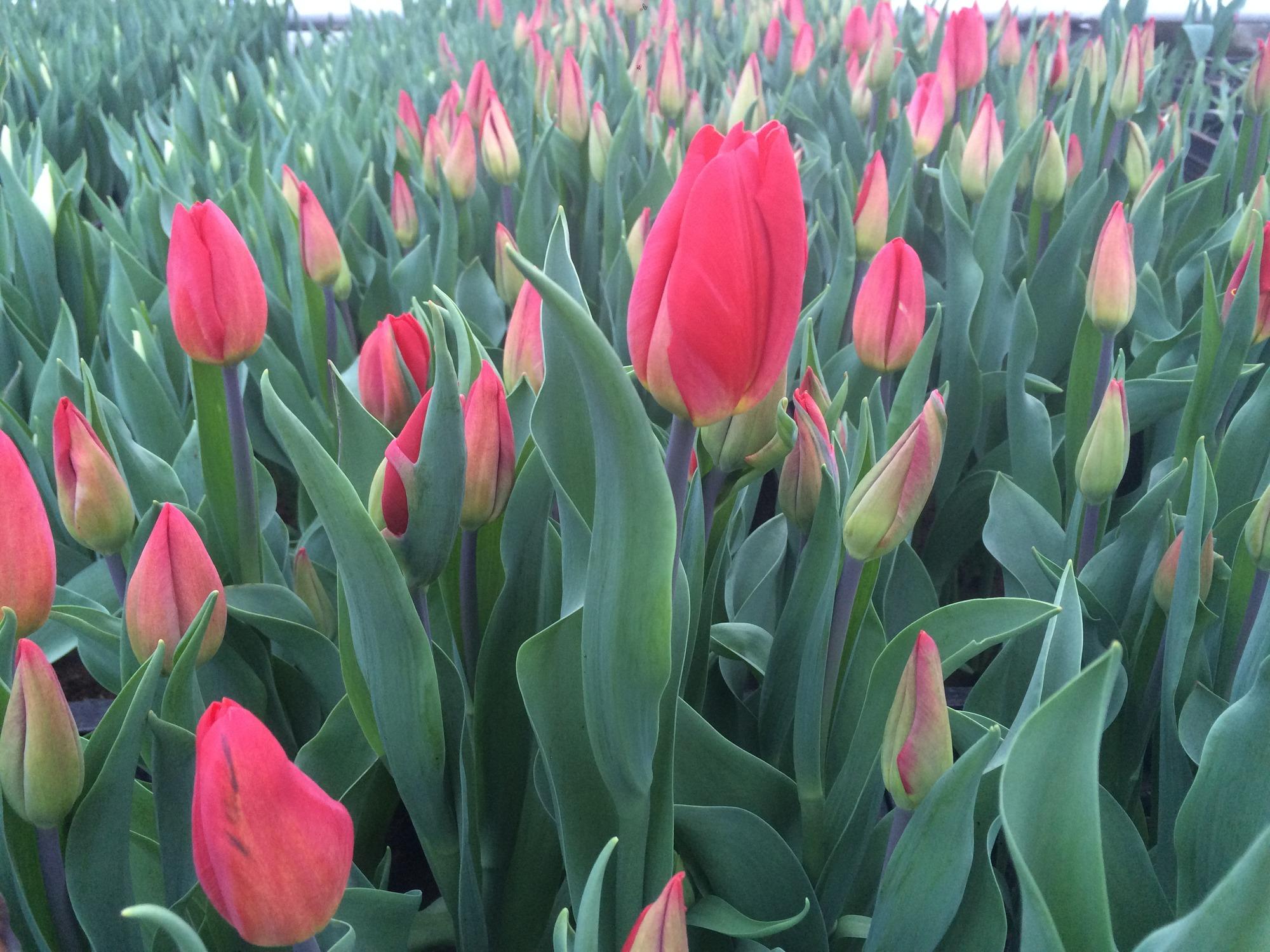 Что сделать маме на день рождения своими руками цветы 44